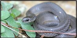 Snake Removal Woodbridge